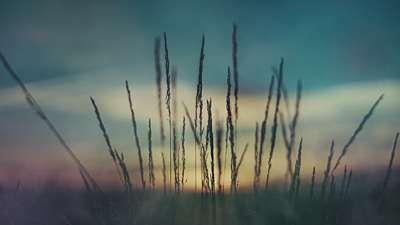 Last Light Wheat Still