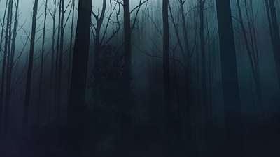 Last Light Forest Still