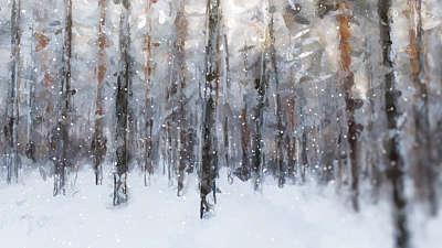 Let It Snow Forest Still