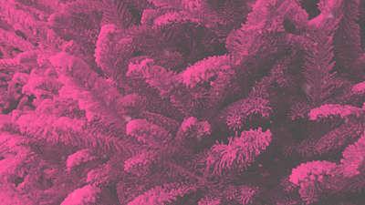 Modern Winter Trees 06