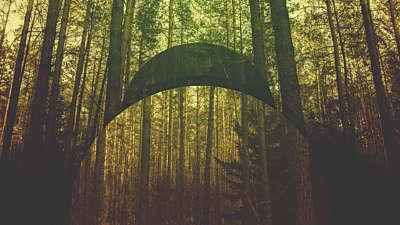 Natural Forest Still