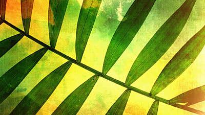 Palm Sunday 3