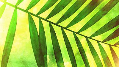 Palm Sunday 4