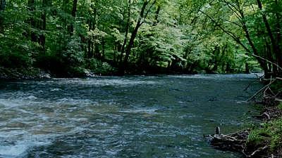 River Wild 12 Still
