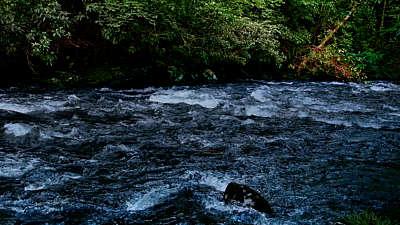 River Wild 14 Still
