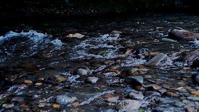 River Wild 17 Still