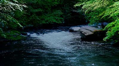 River Wild 2 Still