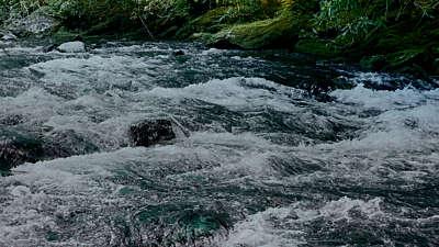 River Wild 3 Still