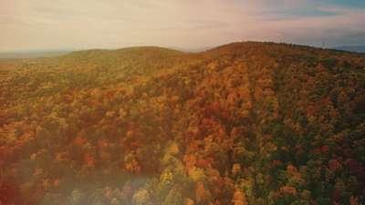 Thanksgiving Flight Autumn Still